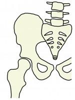 股関節のイメージイラスト