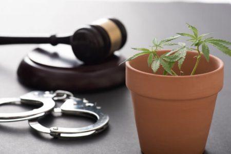 大麻のイメージ画像